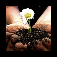 Gardener / Farmer